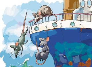 ratos-abandonam-barco